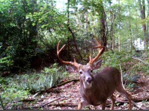 Big 7 Point Buck