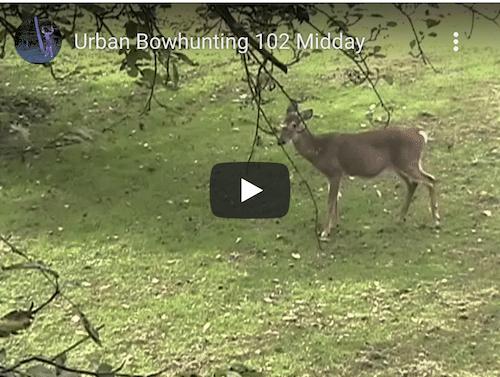 Deer Hunting Video Clips