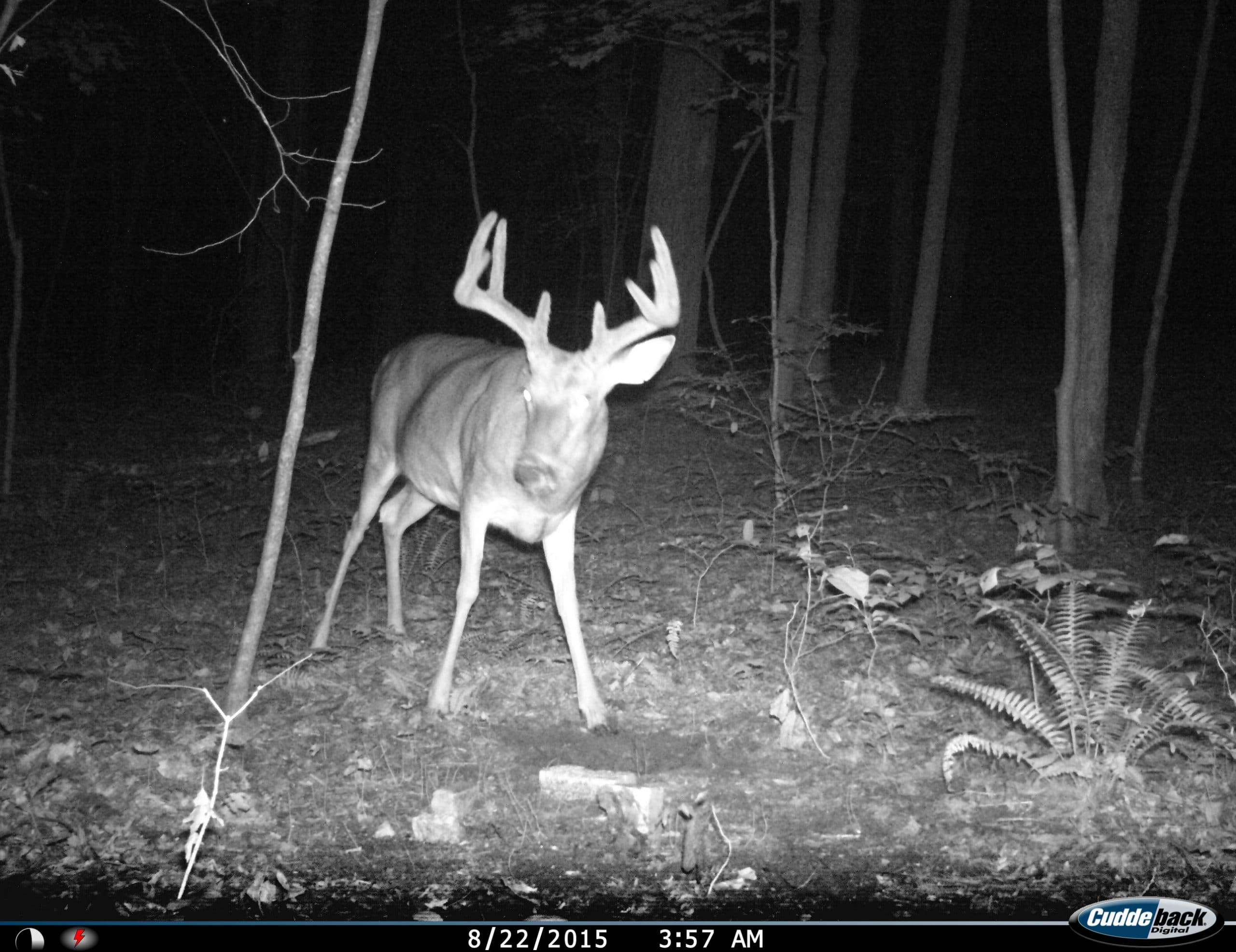 Ohio Trail cam pics
