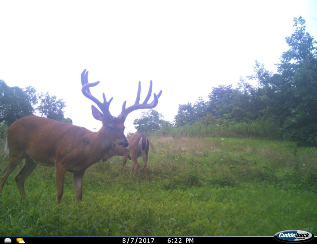 Ohio Trail Cam Pic