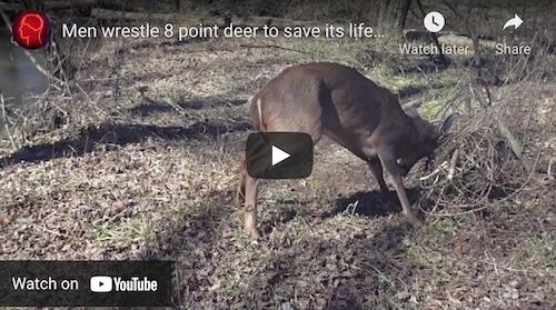 Video of QDMA releasing buck