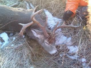 mercer county buck