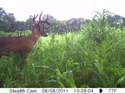 Ohio Big Buck