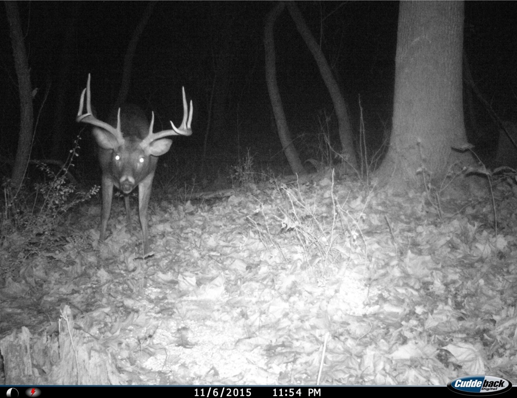 ohio giant buck