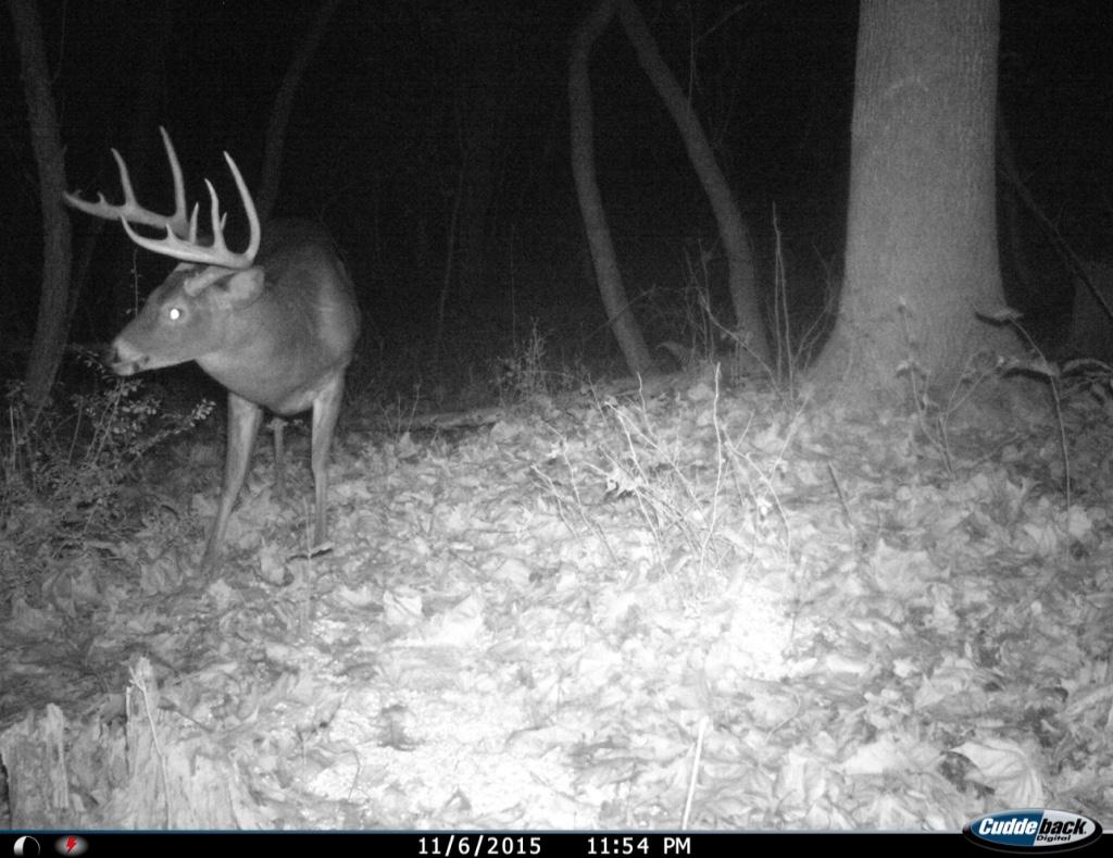 ohio giant buck