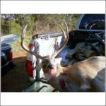Virginia 6 point Buck